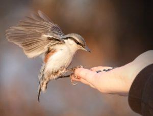 bird on hand